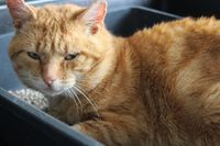 MOLDU ADOPTION SUPER SOCIABLE CHAT CHERCHE 160