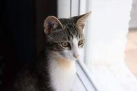 MUFFIN, 6 mois, à l'adoption !! 95