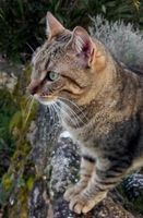 GENTILLE  CHATTE OLIVIA A ADOPTER  0