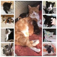 chatons recherchent famille d'accueil  0