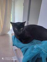 Rocket adorable chaton identifié, vacciné à l'adoption 105