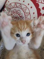 PATCHOULI et LOUPIOTE à l'adoption !! 95