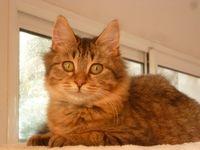 Rando, doux chaton européen 98