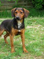 FLIP, petit bout de chien, est à l'adoption! 0 34000 Montpellier
