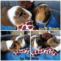 Gus et Noisette