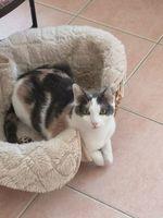 Lucylle à l'adoption 150 30100 Alès