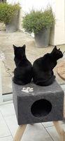 Salem 5 mois cherche un nouveau foyer 55 62660 Beuvry