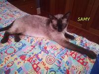 SAMY 300 78170 La celle-saint-cloud
