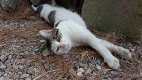 Gilbert gentil chat oublié de tous cherche famille