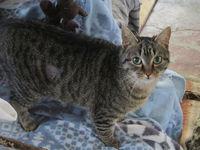 jeune chatte Lena 6 mois a adopter