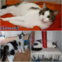 CLEMENT 92400 Courbevoie
