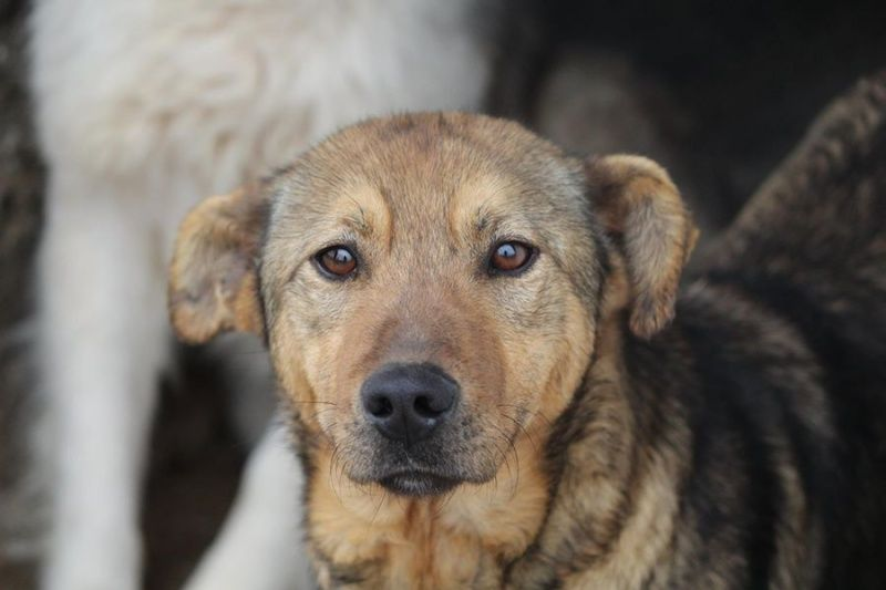 BOWH A adopter via REMEMBER ME FRANCE