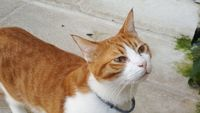 FIGARO, 3 ans, à adopter / FIGARO, 3 years old, needs a home !