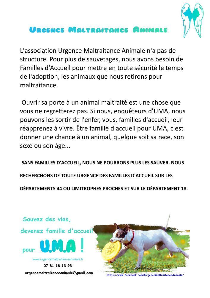 Annonce Chien Chiot Nantes 44000 9926867857