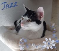 A adopter chaton Jazz 0