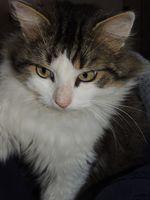 FLUFFY, 1 an, cherche une famille !! 95