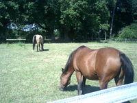 Pension pour vos chevaux 49460 Écuillé