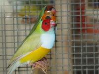diamant gould 57420 Pouilly