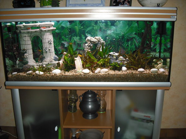 aquarium + meuble