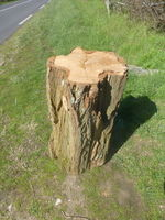 Souches et coupes d'arbres