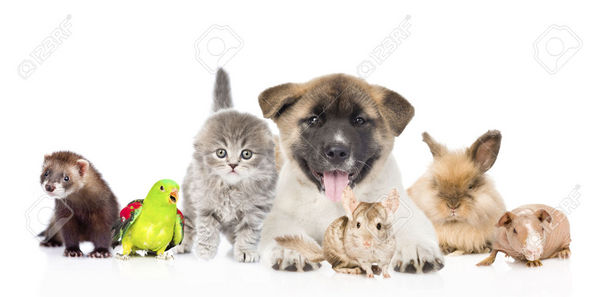 Garde animaux: chien, chat, rongeur,oiseau, tortue & poisson