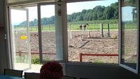 Pension chevaux, poneys.