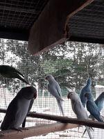 oiseaux de volière