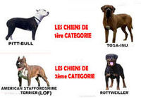 SESSION DE FORMATION ATTESTATION POUR CHIENS CATEGORISE