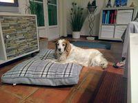 garde votre chien pendant les vacances ou les  weekends