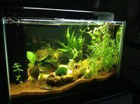 Aquarium Super Fish Home 60 prêt à fonctionner 200 13990 Fontvieille