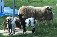Ferme pédagogique venez découvrir les animaux de ferme 18140
