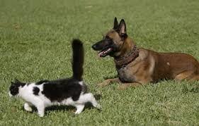 garde d'animaux à domicile