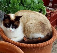 Appels à témoins - chat perdu à Ille sur Têt 66130 0