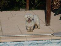 pension pour petits chiens 32600 Ségoufielle