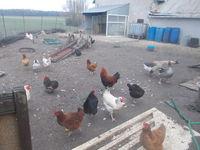 Passionné animaux avec grande ferme je récupère vos animaux 0 45770 Saran