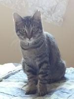 Plusieurs chats cherchent gentille famille 0 06100 Nice