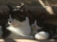 Plusieurs chats cherchent gentille famille