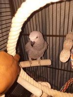 Perroquet Annonces De Perroquets