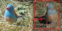 Recherche femelle 'Cap-Bleu' 100 77210 Avon