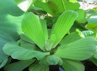 Magnifiques ecrevisses et poissons d aquarium d eau douce 8 57360 Amnéville