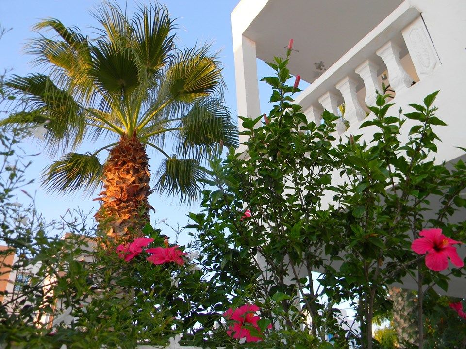 TUNISIE DJERBA appartement gd confort terrasse+ cour privée  Tunisie, djerba midoun