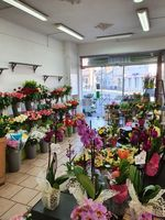 commerce fleurs plantes cadeaux à vendre 140000