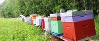 Formation en Apiculture abeilles ruches 0 76690 Saint-georges-sur-fontaine