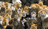 Garde chats dans ma maison à Lunéville 0