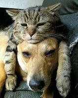 Garde gratuite animaux et maison jour et nuit 0