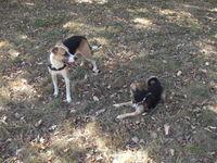 Garde d'animaux / promenade de chiens 0