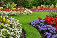 Entretien Régulier de vos espaces verts et potager 0