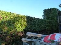 jardinier, paysagiste