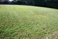 Tonte de pelouse 0 01390 Rancé