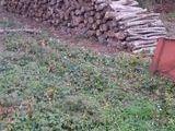 bois de chauffage 45 Montargis (45200)